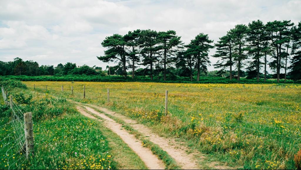 Мужчины преобладают в сельской местности в Швеции
